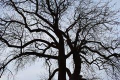 Silueta del árbol Imagen de archivo
