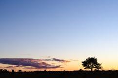Silueta del árbol por crepúsculo Foto de archivo