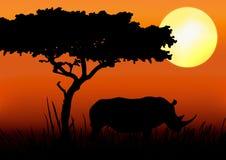 Silueta del rinoceronte en puesta del sol ilustración del vector
