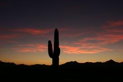 Silueta del Saguaro de la puesta del sol Foto de archivo libre de regalías
