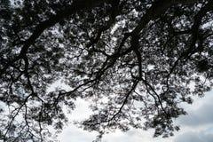 Silueta del toldo de árbol Foto de archivo