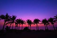 Silueta del treea del coco con puesta del sol Imágenes de archivo libres de regalías
