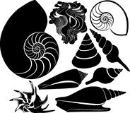Silueta del vector de la cáscara del mar submarino acuático del océano de la fauna del mar del nautilus ilustración del vector