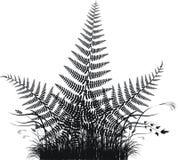 Silueta del vector de la hierba con las hojas del helecho Imagenes de archivo