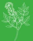 Silueta del vector de la planta libre illustration