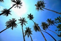 Silueta en el cielo azul en el mar, foco del árbol de coco de la selección en imagen fotografía de archivo libre de regalías
