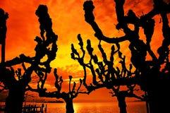 silueta en la puesta del sol, árboles del árbol Fotos de archivo libres de regalías