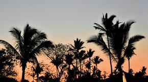 Silueta en la puesta del sol en una playa tropical imágenes de archivo libres de regalías