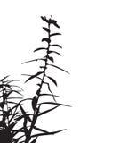 Silueta floral de la ramificación Imágenes de archivo libres de regalías