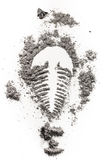 Silueta fossile del dibujo de la impresión de Trilobite en el polvo de piedra, ceniza, Fotos de archivo