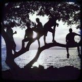 Silueta frente al mar de la puesta del sol de 5 individuos en un árbol Fotos de archivo