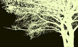 Silueta grande del árbol y de las ramas Vector detallado Imagen de archivo libre de regalías