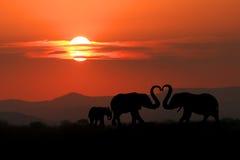 Silueta hermosa de elefantes africanos en la puesta del sol Fotografía de archivo libre de regalías