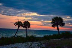 Silueta hermosa de la puesta del sol de la palmera en la playa de ciudad de Panamá, Flor imágenes de archivo libres de regalías