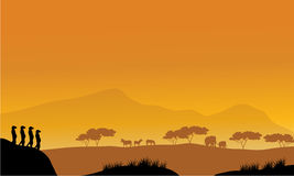 Silueta hermosa del meerkat en la tarde Fotos de archivo