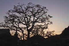Silueta japonesa del árbol Foto de archivo