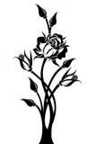 Silueta negra de la rama con color de rosa y los brotes. Imagenes de archivo