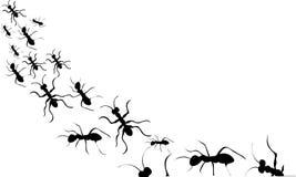 Silueta negra de las hormigas Imágenes de archivo libres de regalías