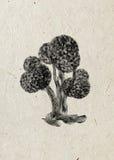 Silueta negra del árbol extraño de hadas del boj aislado en fondo beige del papel de arroz Foto de archivo