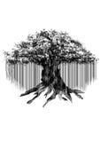 Silueta negra del baniano viejo aislada en el fondo blanco Imágenes de archivo libres de regalías