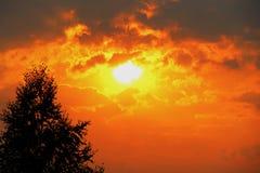 Silueta sola del árbol en campo abierto en la naranja vibrante de la puesta del sol Foto de archivo libre de regalías