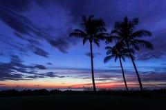 Silueta tropical de la puesta del sol foto de archivo