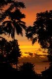 Silueta tropical de la puesta del sol Imagenes de archivo