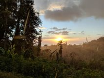 Silueta tropical del pasado lluvioso de la puesta del sol de árboles Imagenes de archivo