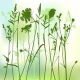 Silueta verdadera de la hierba - vector Foto de archivo