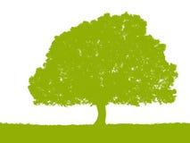 Silueta verde del árbol en el fondo blanco Imagen de archivo libre de regalías