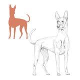 Silueta y bosquejo del perro del faraón Imagen de archivo libre de regalías