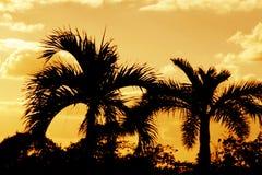 Siluetas anaranjadas de la palma Foto de archivo libre de regalías