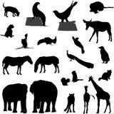 Siluetas animales Foto de archivo libre de regalías