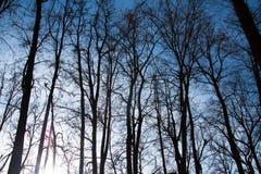 Siluetas de árboles altos en la puesta del sol en el bosque Foto de archivo libre de regalías