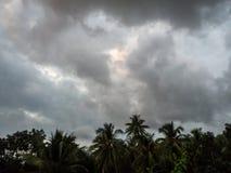 Siluetas de ?rboles contra el cielo azul y las nubes multicoloras imagen de archivo