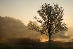 Siluetas de árboles en una mañana de niebla brumosa con comi de los rayos del sol imagen de archivo libre de regalías