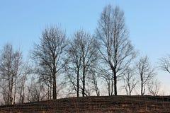 Siluetas de árboles sin las hojas en la puesta del sol Imágenes de archivo libres de regalías