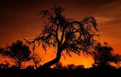 Siluetas de árboles sobre el cielo rojo Foto de archivo