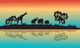 Siluetas de animales africanos por mañana Imágenes de archivo libres de regalías