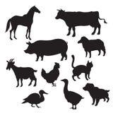 Siluetas de animales domésticos Imágenes de archivo libres de regalías