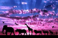 Siluetas de animales en puesta del sol nublada púrpura Fotos de archivo