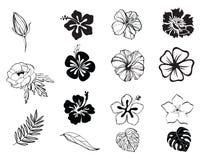 Siluetas de blanco y negro de las flores aisladas Imagenes de archivo