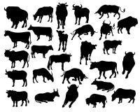 Siluetas de Bull Imágenes de archivo libres de regalías