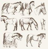 Siluetas de caballos Fotografía de archivo