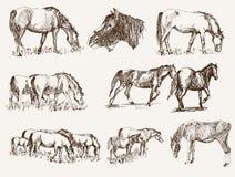 Siluetas de caballos Imagenes de archivo