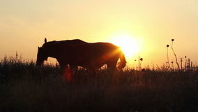 Siluetas de caballos en la puesta del sol almacen de metraje de vídeo