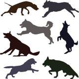 Siluetas de diversas razas del perro Fotos de archivo