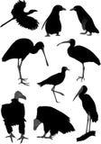 Siluetas de diversos pájaros Foto de archivo libre de regalías