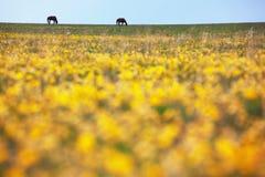 Siluetas de dos caballos en el prado Imagen de archivo