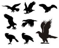 Siluetas de Eagle Imagen de archivo libre de regalías